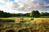 Indulge in the stunning Deer Park at Forest of Arden Golf Club