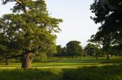 The brilliant ayleford course at the Forest of Arden Golf Club