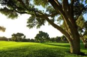 real club valderrama golf course