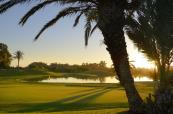 Palm tree and green at Golf Du Soleil